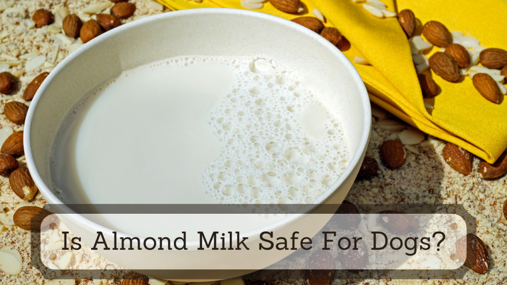 Is Almond Milk Safe For Dogs
